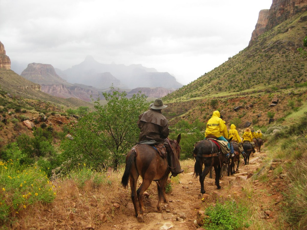 A mule train heading down into the canyon.
