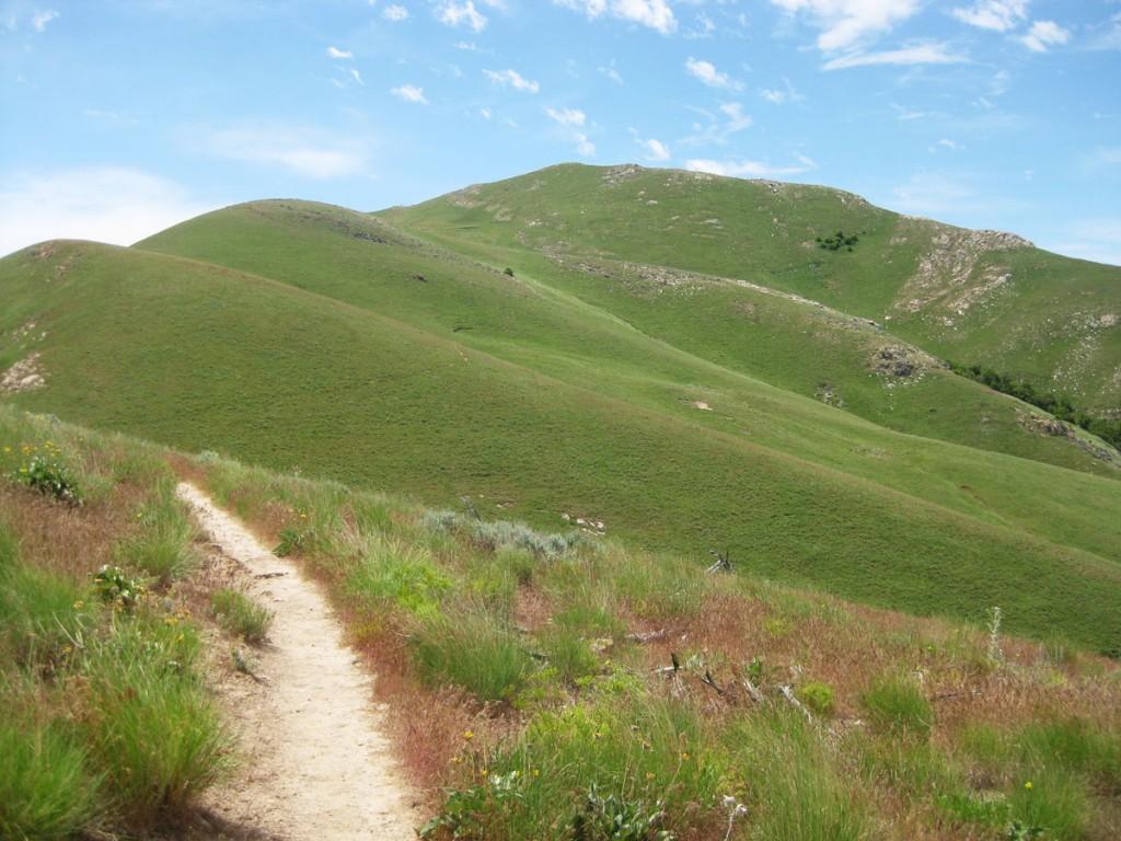 The upper slopes of Frary Peak.