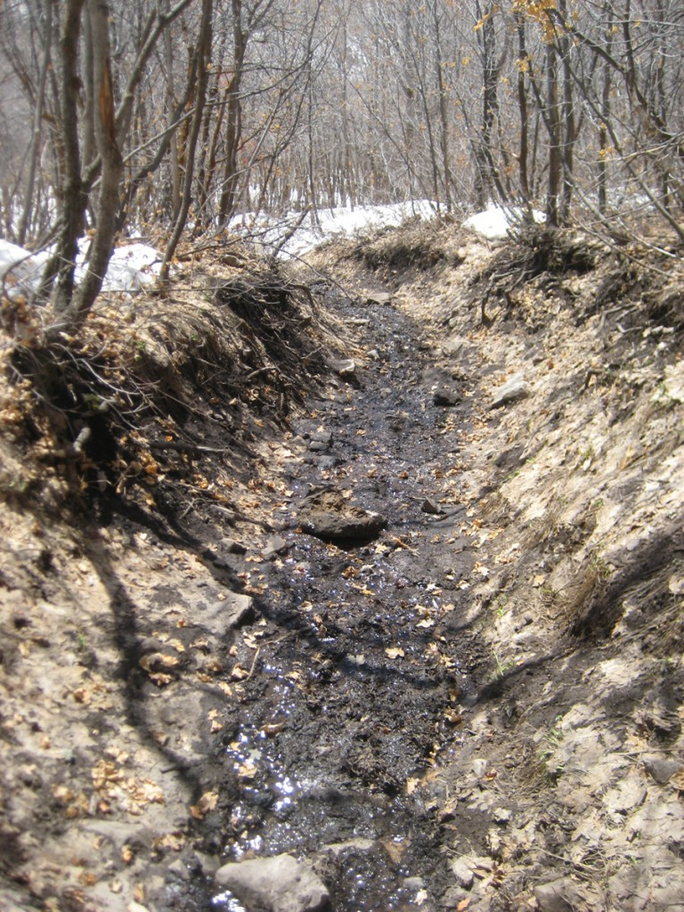 The trench-like trail that turned into a small stream.