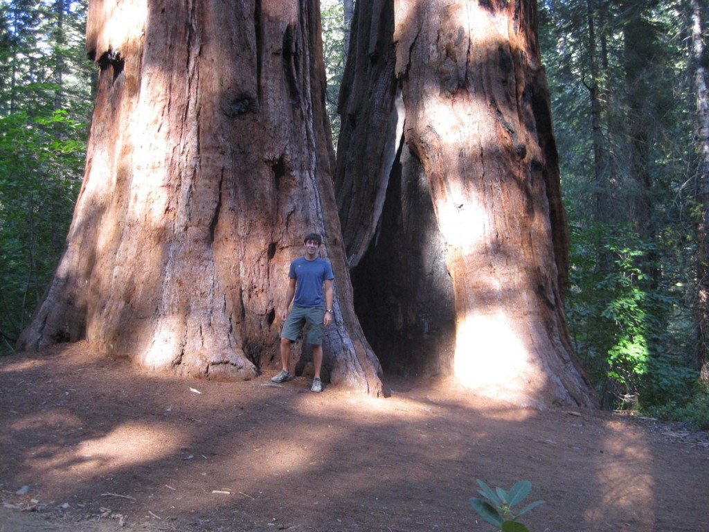Me and the giant sequoias.