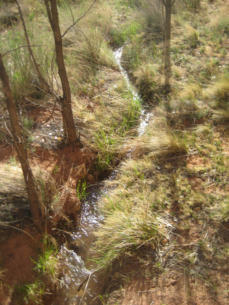 Some couple hundred year old Native American irrigation ditches.