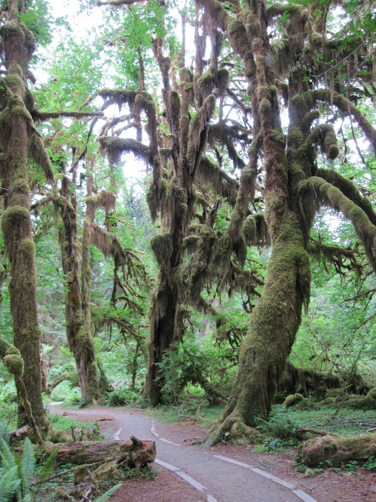 The Hoh Rain Forest.