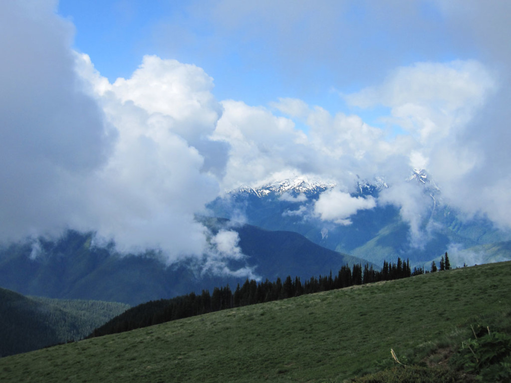The central peaks of the Olympic Range from Hurricane Ridge in Olympic National Park.
