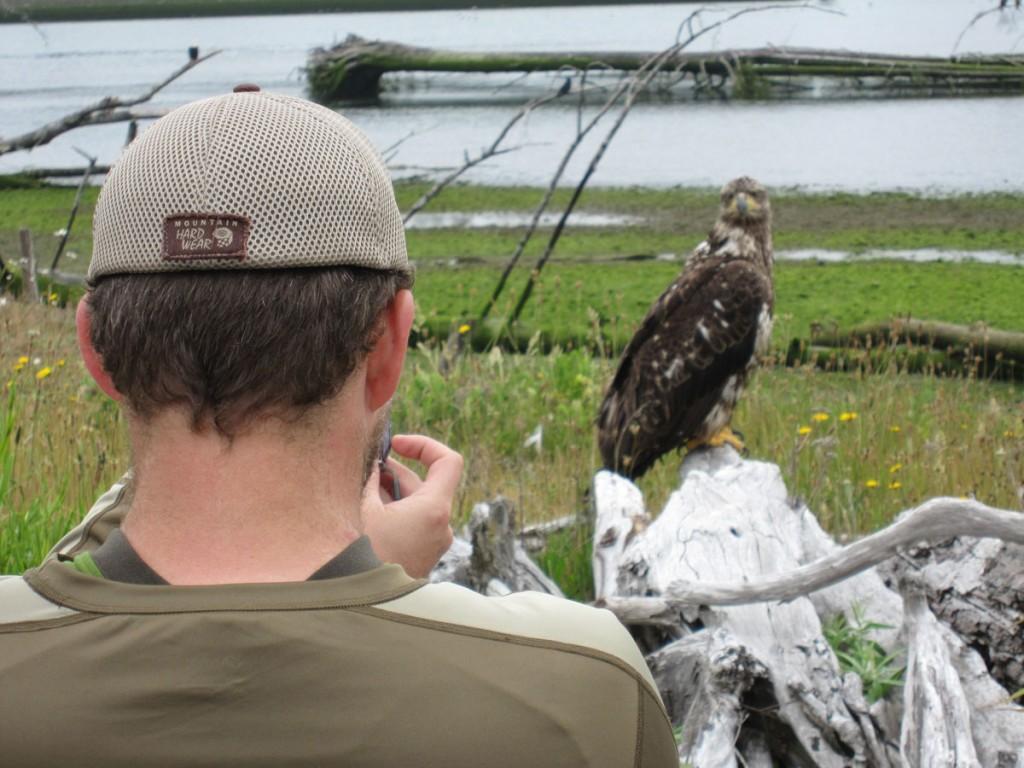 Matt harassing a young bald eagle.